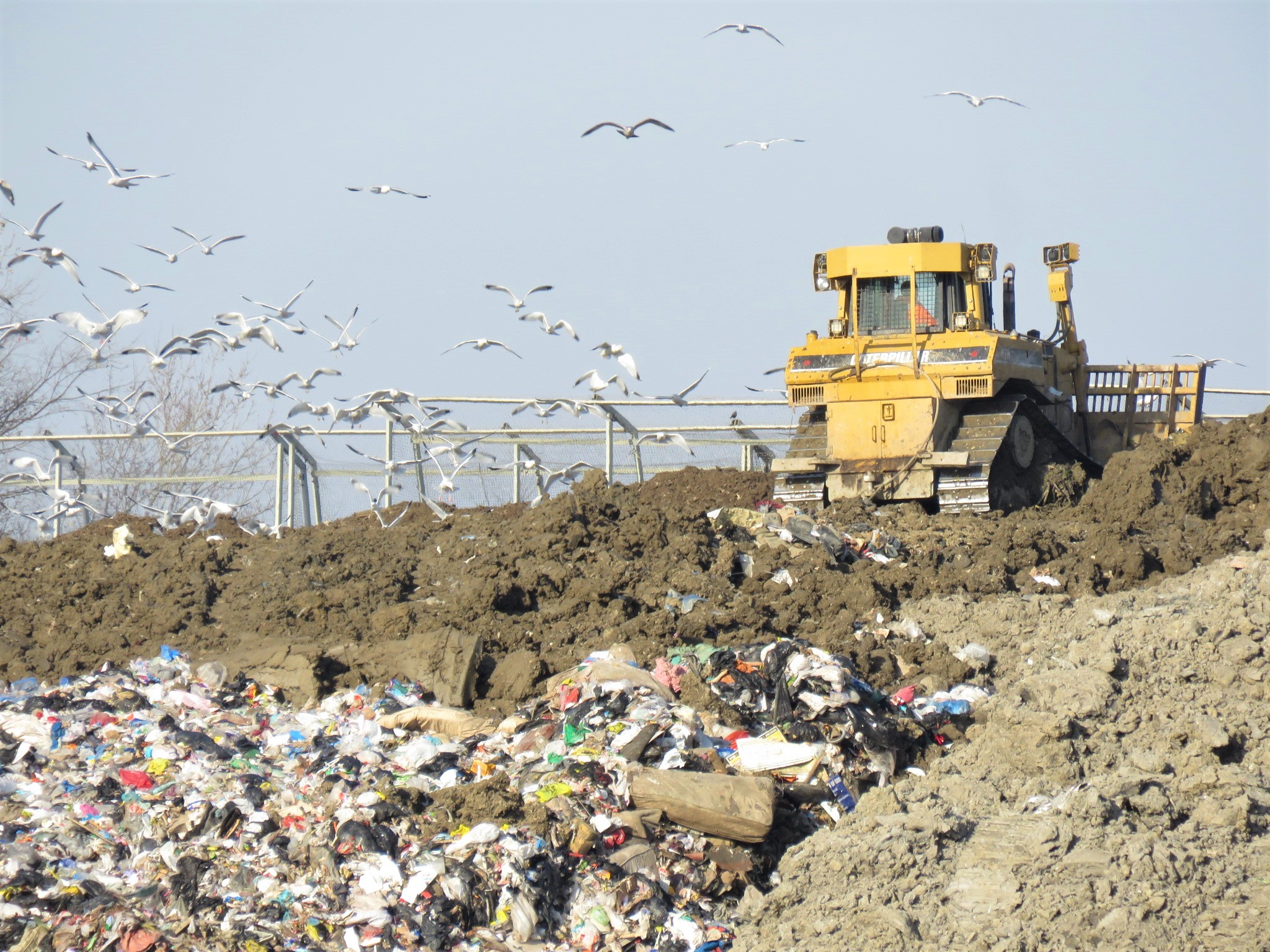 Birds and machinery at the Regional Landfill in Essex