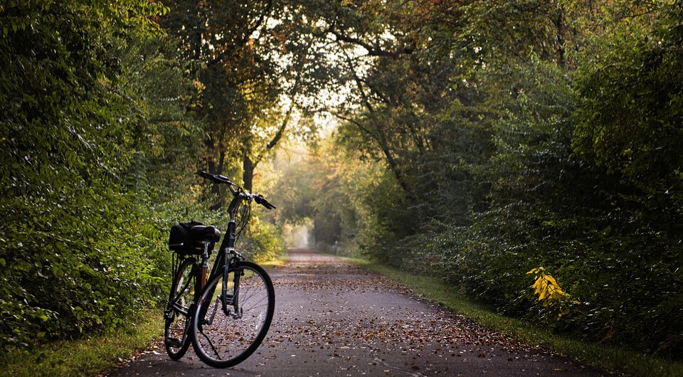 A bicycle on a pathway in the woods.
